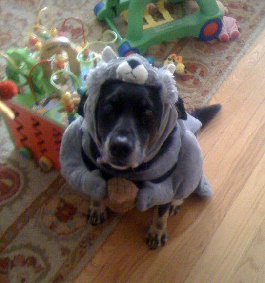 How mean ... & My 25 favorite Halloween Pet Costumes of 2011 | inotternews.com