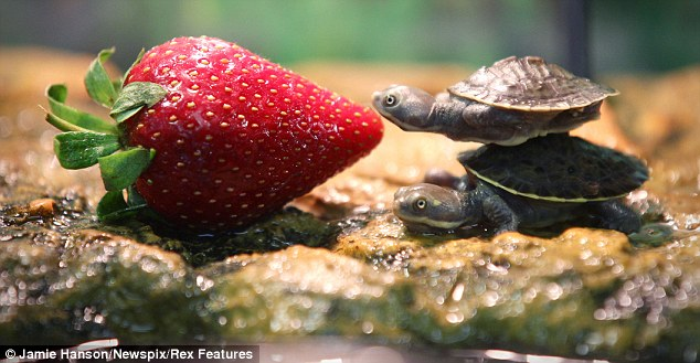 Cutest Turtles Ever | inotternews.com