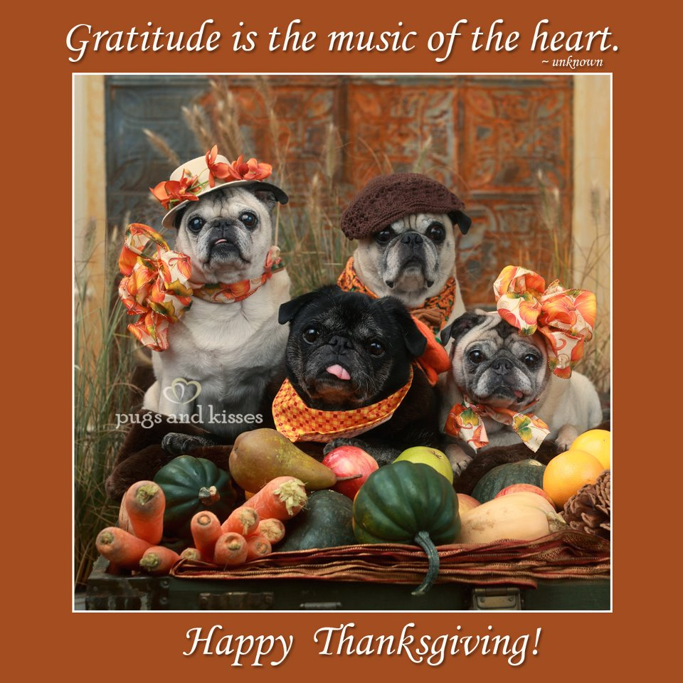 Funny Happy Thanksgiving Dog Pictures
