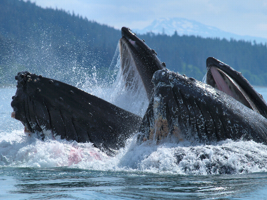 The Song of the Humpback | inotternews.com