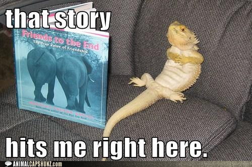 Funny Pictures With Captions Clean With Animals Reptile | inott...