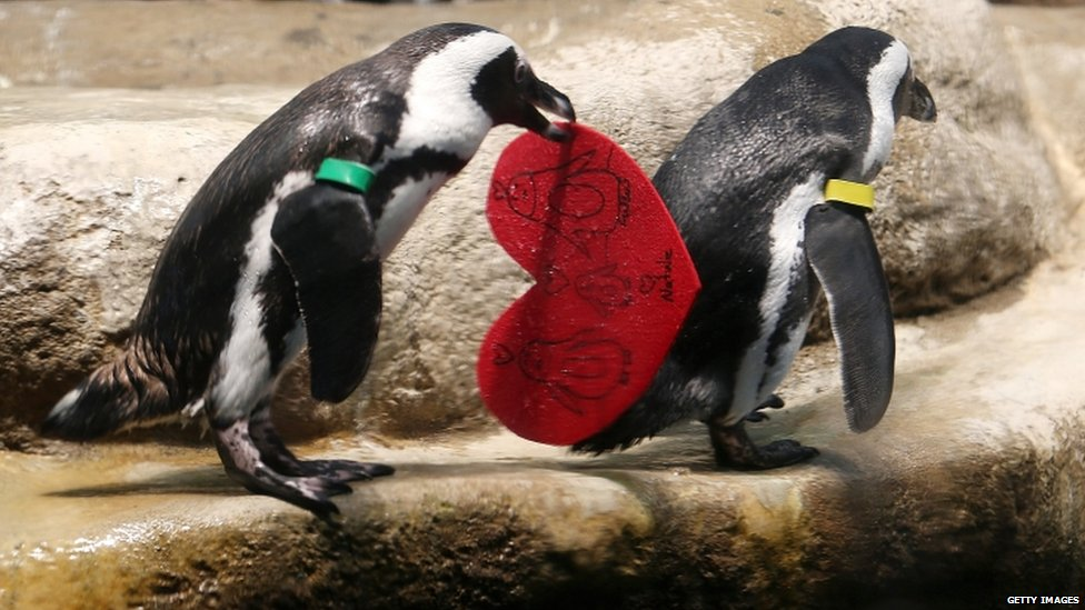 share - Valentines Animals