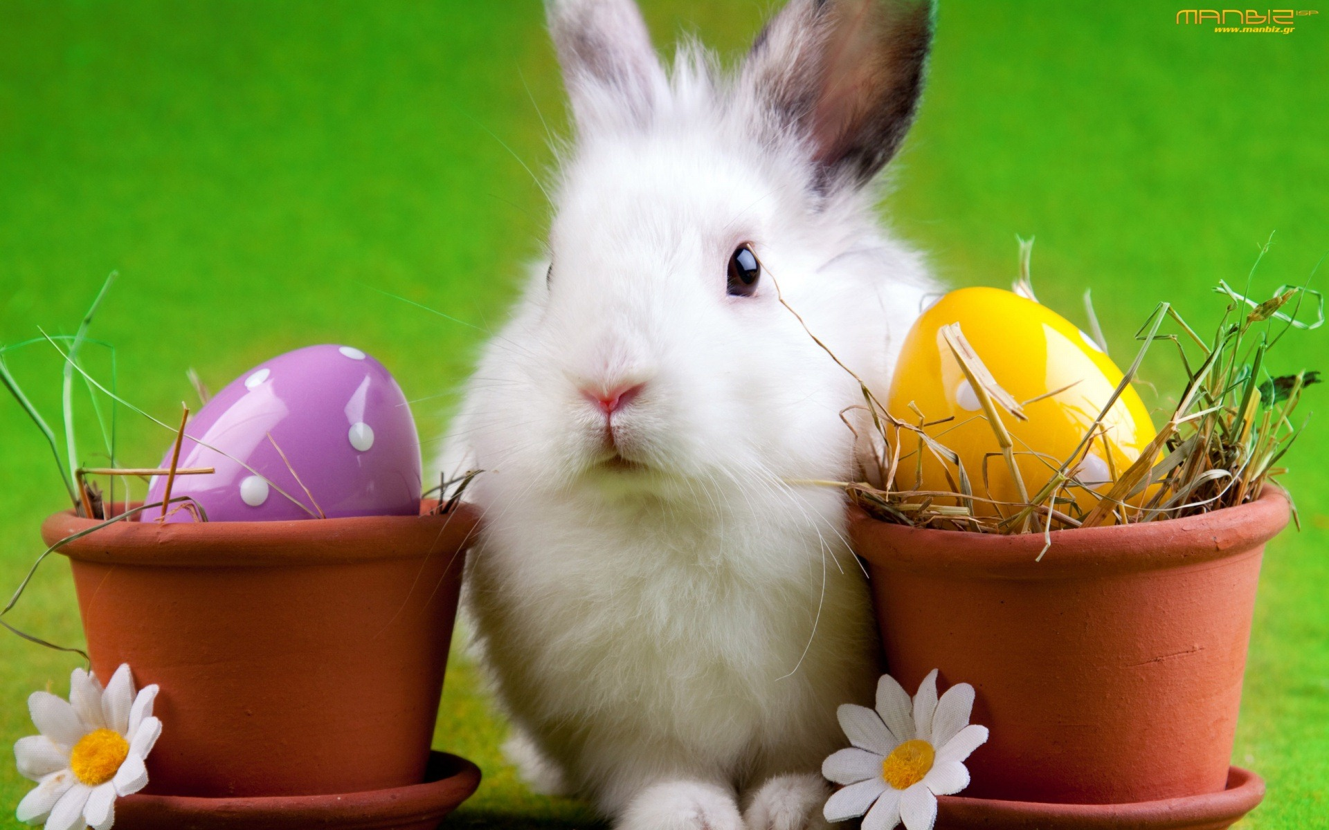 Happy Easter Bunday | inotternews.com