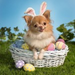 happy_easter-animal-wallpaper