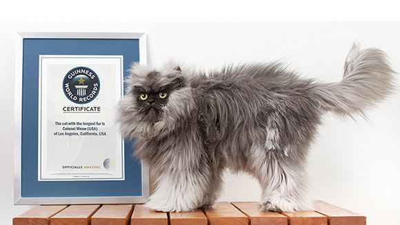 meet - Smallest Cat In The World Guinness 2015