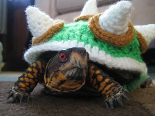 Happy ... & Tortoise Cozy Costumes | inotternews.com