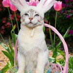 EasterKitty