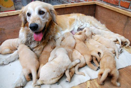 Happy Mother S Day With Animal Moms Amp Kids Inotternews Com