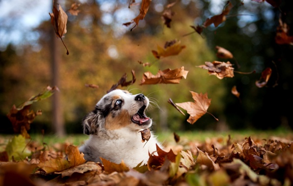 Animals In Autumn Inotternews Com