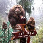 Monkeys on  E'Mei Mountain in the southwest China province of Sichuan. (Source: news.xinhuanet.com)