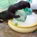 (SourceL http://www.insideseaworld.com/happy-st-patrick-s-day-otter-outlook)