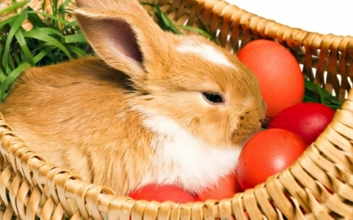 Image result for lovethispic easter