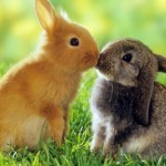 Source: http://www.avso.org/interior-design-ideas/the-legend-of-the-easter-bunny-where-does-the-easter-bunny