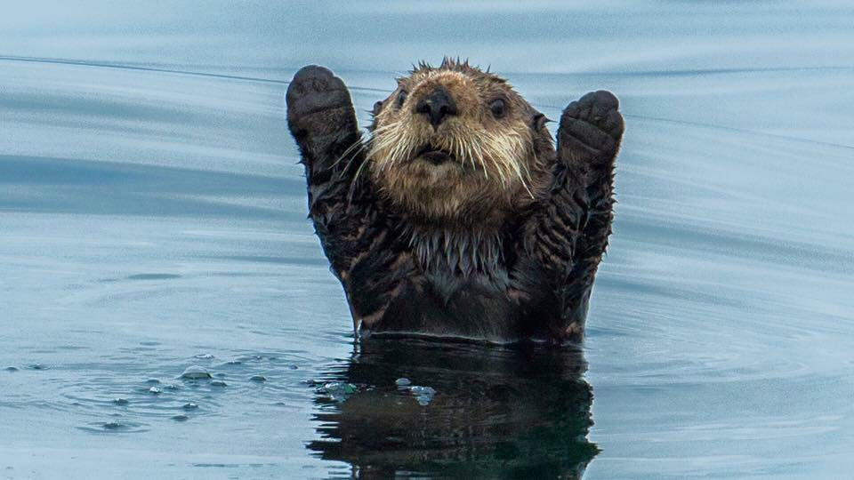 Image result for otter